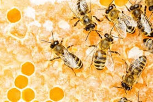 Trypophobia Bees