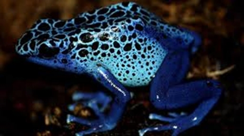 Frog Archives Trypophobia Reference Website