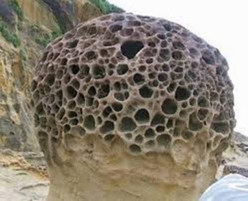 Trypophobia Rock