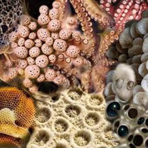 Trypophobic Octopus