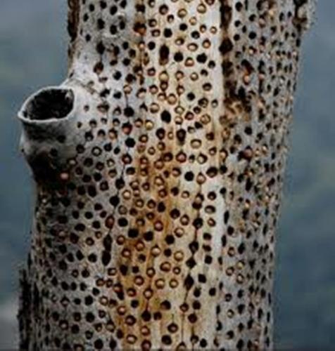 Trypophobic Branch
