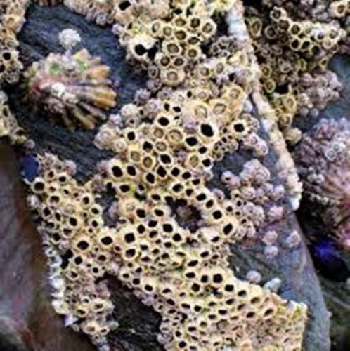 Trypophobia Coral 2