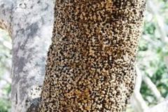 Trypophobia Tree