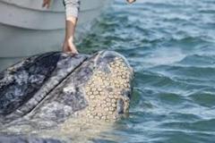 Trypophobic Whale