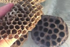 Trypophobia Structure