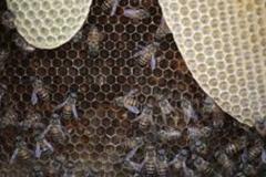 Trypophobia Beehives