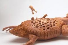 Trypophobic Toad