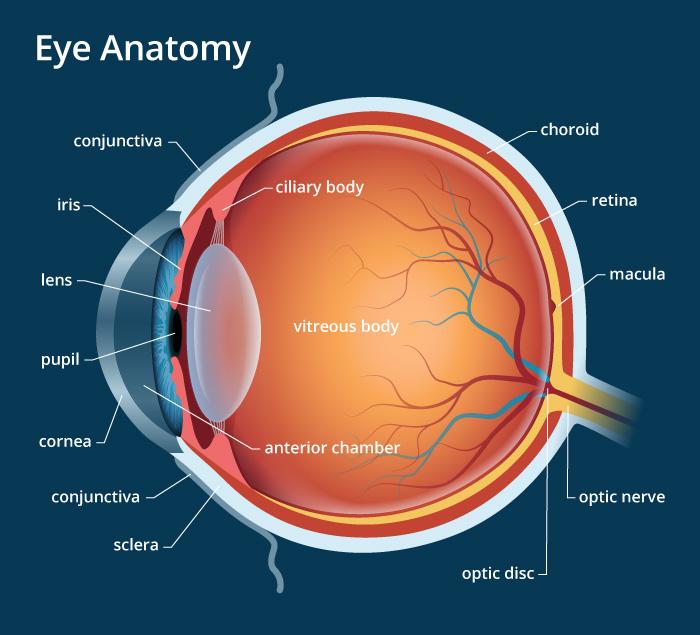 Trypophobia eye