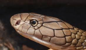 trypophobic snake