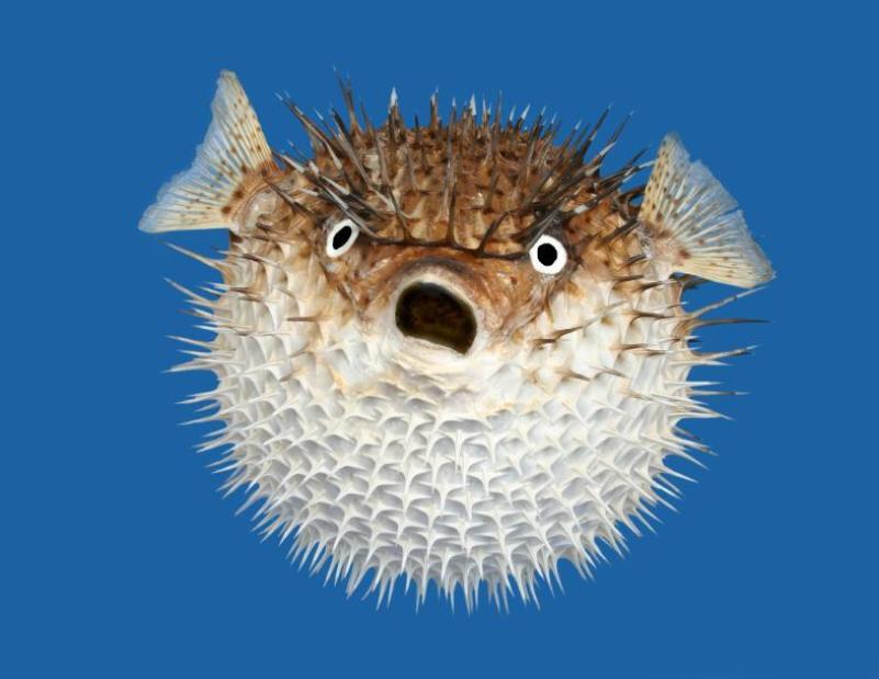 Trypophobic fish
